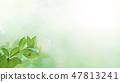 Background - Fresh green - Green - Ladybug - Spring - Summer - sunshine 47813241