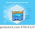 Orthopedic Mattress Structure Vector Scheme 47814123