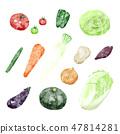 야채 일러스트 흰색 배경 47814281