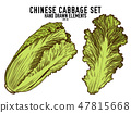 Vector collection of hand drawn colored  chinese cabbage 47815668
