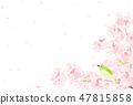 ดอกยูกิและดอกซากุระ 47815858