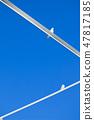 푸른 하늘과 갈매기 47817185