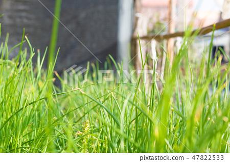 是蔥還是草地 47822533