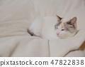 一隻貓 47822838