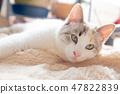 一隻貓 47822839