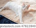 一隻貓 47822840