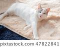一隻貓 47822841