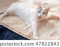 一隻貓 47822843