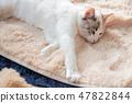 一隻貓 47822844
