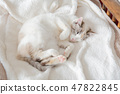 一隻貓 47822845
