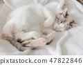 一隻貓 47822846