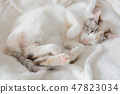 一隻貓 47823034