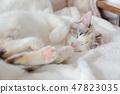 一隻貓 47823035