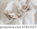 一隻貓 47823037