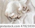 一隻貓 47823039