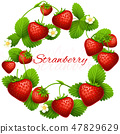 Juicy strawberry vector frame wreath. Health dessert eating strawberries background 47829629