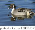 이나 게 해변 공원의 연못에 온 고방 47833812