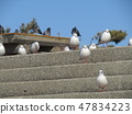 Migratory bird in a rest on the stairs of Kemigawa river beach 47834223