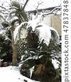树叶因雪重而闪亮的自行车树 47837848