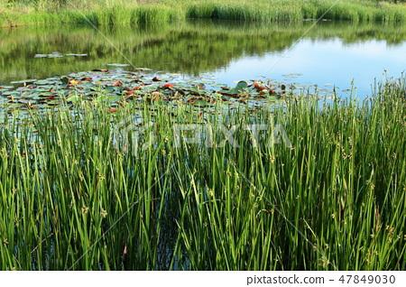 고타리 못, 백로, 연못, 물부추,  47849030