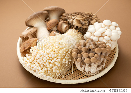 버섯 세트 47858195