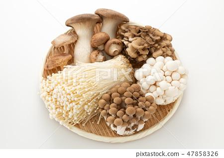 蘑菇集合 47858326