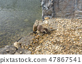 Otter eating fish 47867541