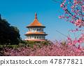 台湾台北天元宫美丽的樱花季节 47877821