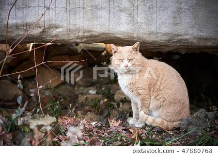 응시하는 고양이 47880768
