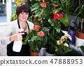 Shop assistant tending red anturion 47888953