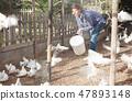 Female farmer feeding fancy pigeons 47893148