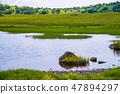 【나가노 현】 기리가 미네 · 야시마 습지 연못 47894297
