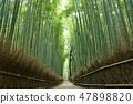 Bamboo grove of Kyoto fresh green 47898820