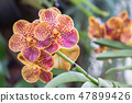 Orchid flower in orchid garden at winter spring. 47899426