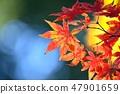 Momiji的秋葉 47901659