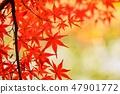 Momiji的秋葉 47901772