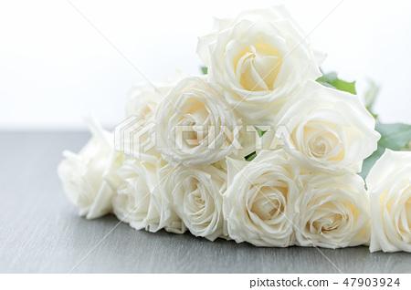 白玫瑰禮物 47903924