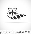 Vector of raccoon design. Wild Animals. 47908399