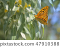 Monarch butterflies on willow 47910388