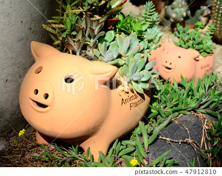 Parent and child of pig 47912810
