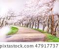 樱花树 47917737
