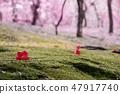 茶花 47917740