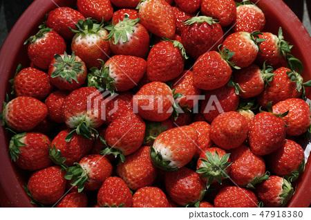 딸기 47918380