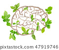 Plant Brain 47919746