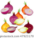 Onions Isolated 47923170