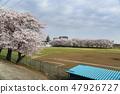 ดอกซากุระรอบสนามเบสบอล Atsugi ริมแม่น้ำ Sagami 47926727