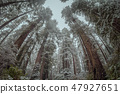 Redwood Forest Landscape in Northern California 47927651