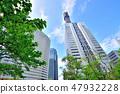 미나토 미라이 신록과 고층 아파트 군 47932228