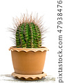 Green cactus with on white 47938476