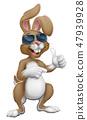 兔子 兔 太阳镜 47939928